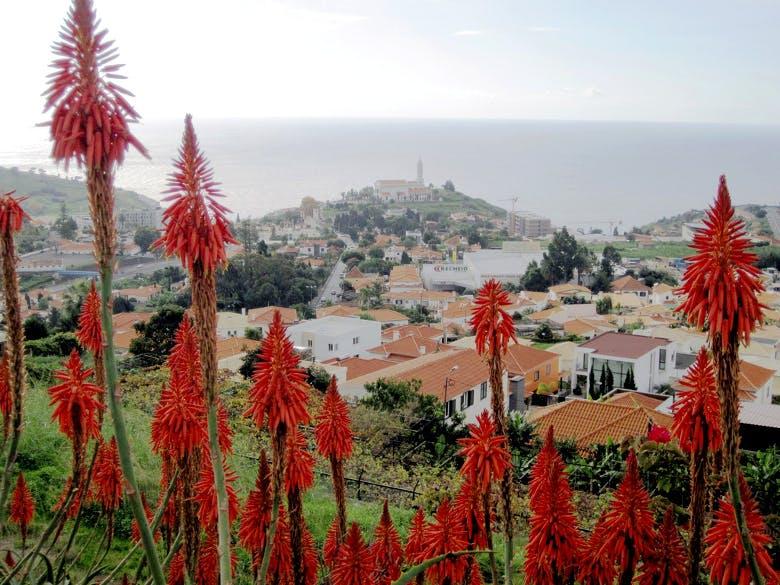 Funchal (338 €)