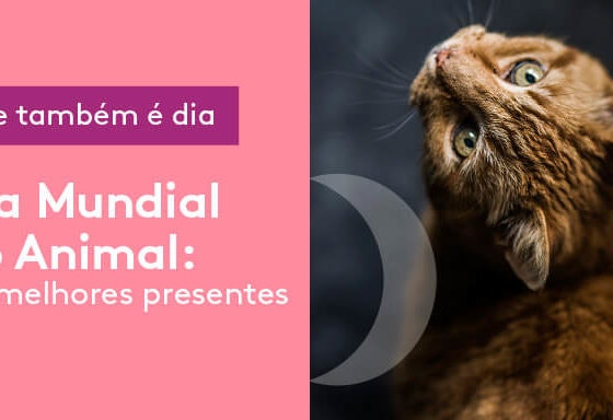 dia-do-animal_banner